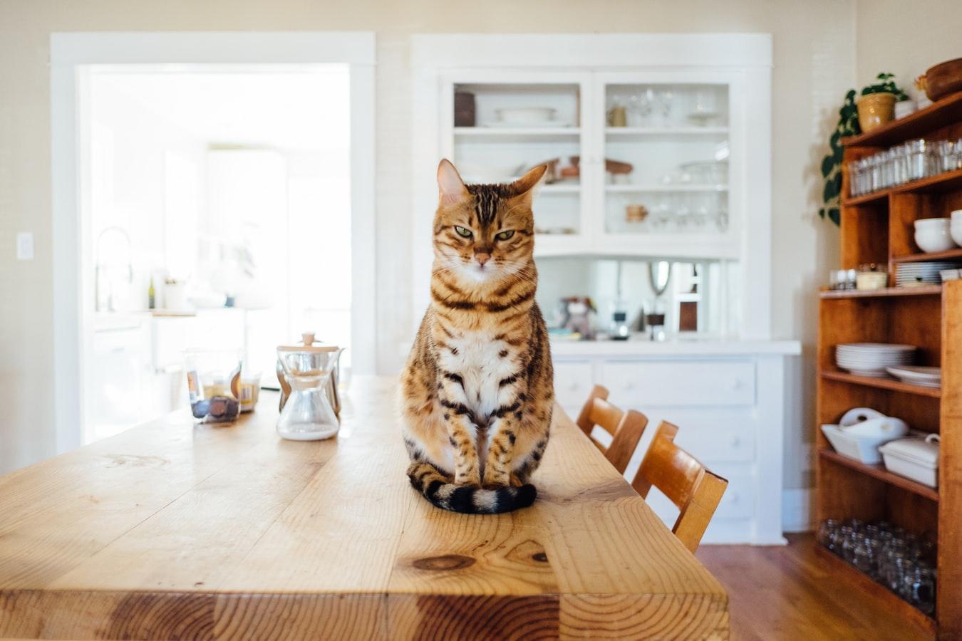 Personnalité de chat